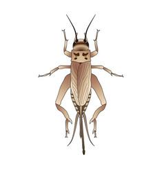 Cricket grig gryllus campestris sketch of vector