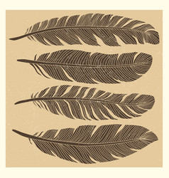 set of grunge vintage bird feathers design vector image vector image