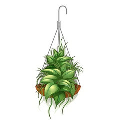 A hanging pot with a green plant vector