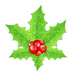 Christmas decoration holly berry branches isolated vector image