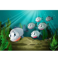 Six fishes with big fangs under the sea vector image vector image