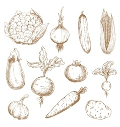 Fresh vegetables hand drawn sketches vector image