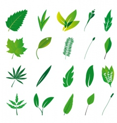collection of isolated green leaves vector image