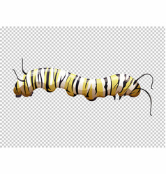 Caterpillar with yellow and black striped vector