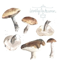 Set of watercolor mushrooms brown cap boletus vector