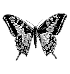 swallowtail vintage engraving vector image