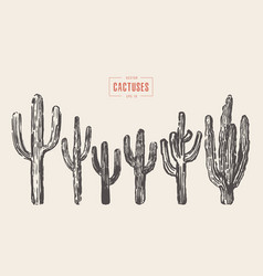 Set of cactuses hand drawn ink vector