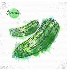 Watercolor cucumber sketch vector