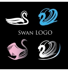 Black swans logo design template vector