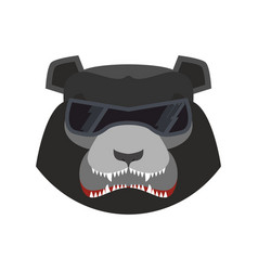 Angry bear in green beret evil baribal aggressive vector