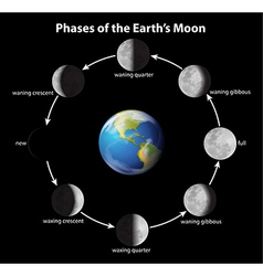 Phases of the moon vector