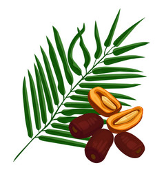 Delicious ripe dates fruits and green palm branch vector
