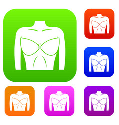 female breast in a bra set collection vector image