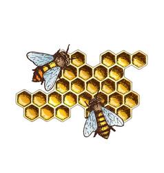Honey ink sketch vector