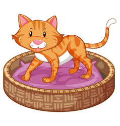 ginger cat in basket vector image vector image