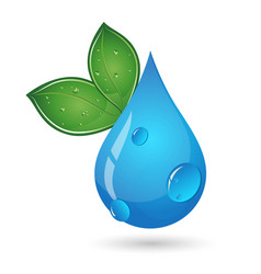 Drop of water and green leaves vector