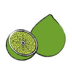 Lemon citrus fruit fresh vitamin vector
