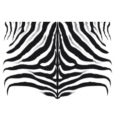 Zebra pattern background texture vector