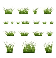 Green grass bushes set vector