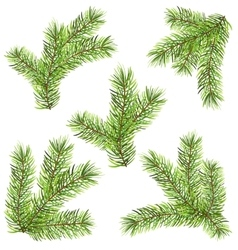 Spruces Branches Isolated on White Background vector image vector image