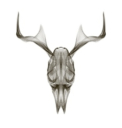 Deer skull 3d style for print tattoo t vector