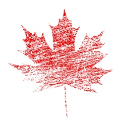 Grunge maple leaf vector