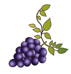 Colorful silhouette of bunch of grapes with branch vector