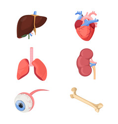 Medical human organs realistic heart two lungs vector