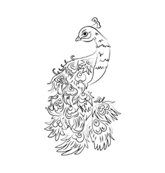 peacock on a white background Black vector image