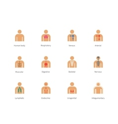 Human Body and Anatomy color icons on white vector image