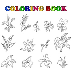 Coloring book of set tropical plant vector