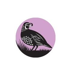California valley quail bird circle retro vector