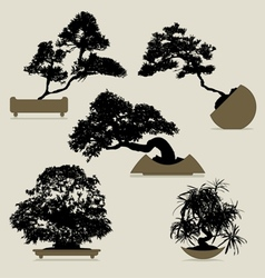 Bonsai trees collection vector