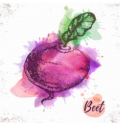Watercolor beet sketch vector