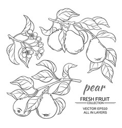 pear set vector image