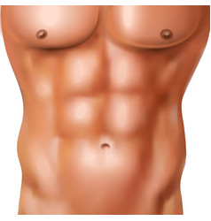 Realistic man abs pack vector