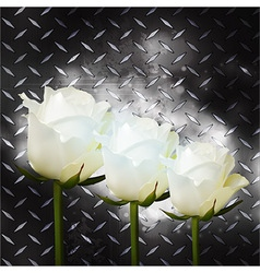 White roses on black metal plate vector image vector image
