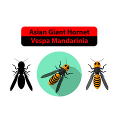 asian giant hornet or vespa mandarinia on white vector image vector image