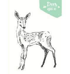 Sketch deer vintage hand drawn vector