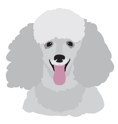 Toy Poodle vector image