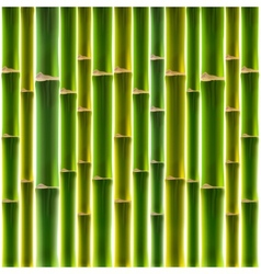 Green bamboo fence background vector