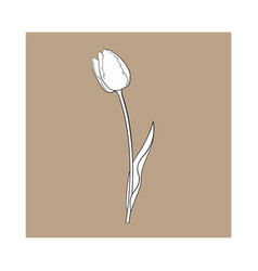 hand drawn of side view black and white tulip vector image vector image