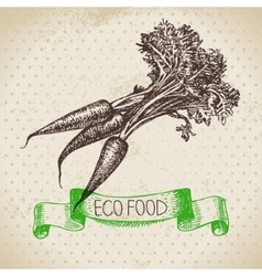 Hand drawn sketch carrots vegetable eco food vector