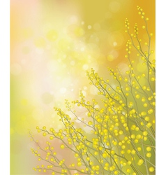 Mimosa background vector