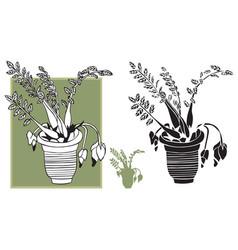 room flower in pot vector image