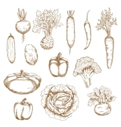 Sketch of healthy organic vegetables icons vector