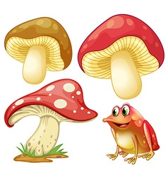 Fresh mushrooms and red frog vector image