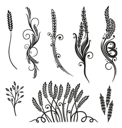 Grain wheat bakery vector