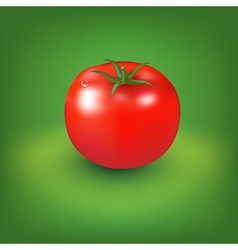 Red Tomato With Green Background vector image vector image