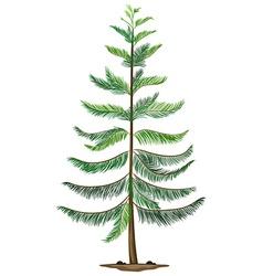 A norfolk island pine vector